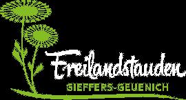 Dracocephalum grandiflorum Großblumiger Drachenkopf
