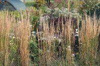 Calamagrostis x acutiflora ´Overdam´